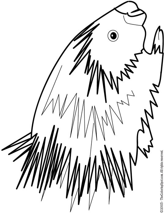 porcupine coloring pages cliparts co