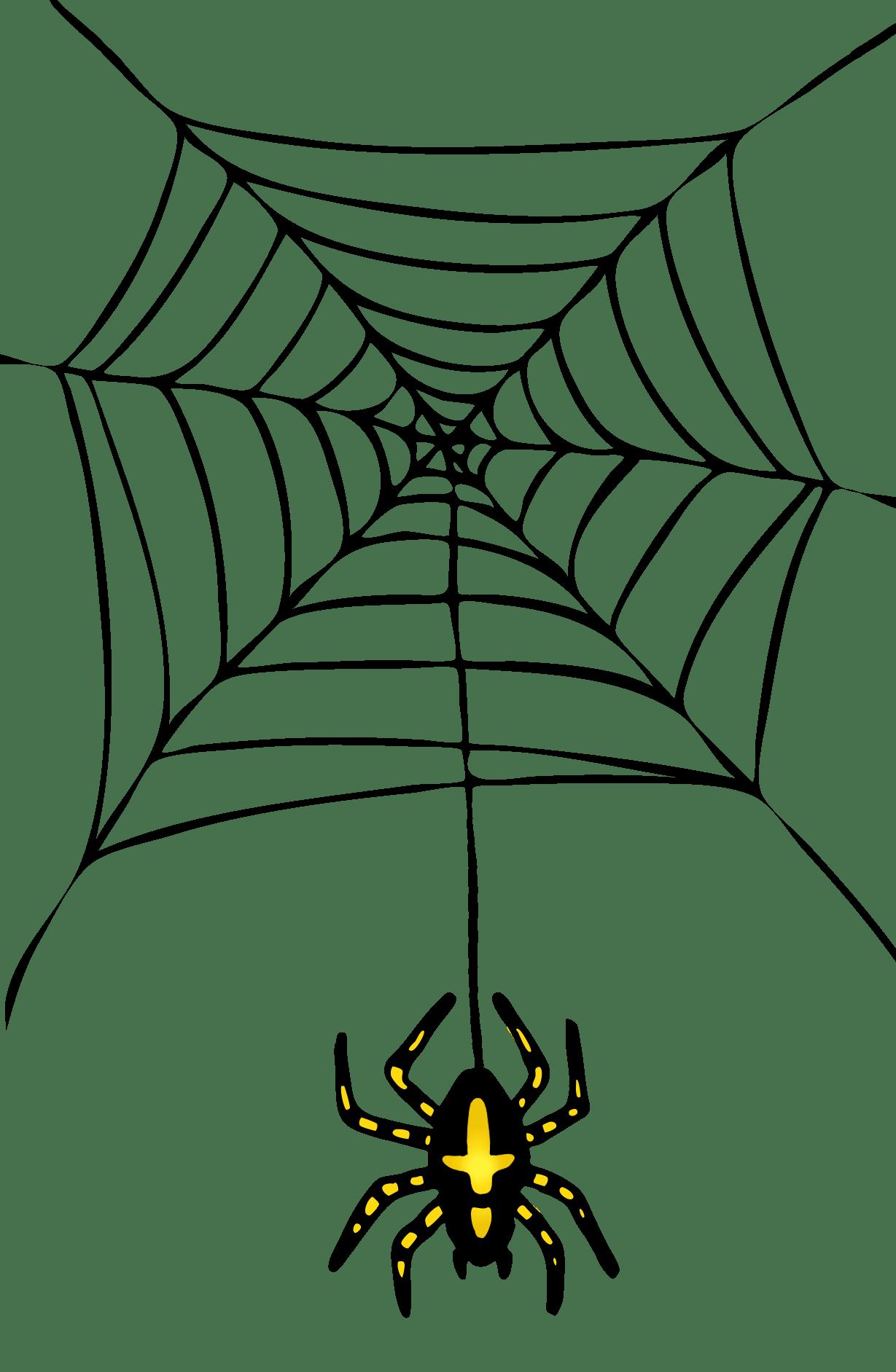 Halloween Spider Pictures