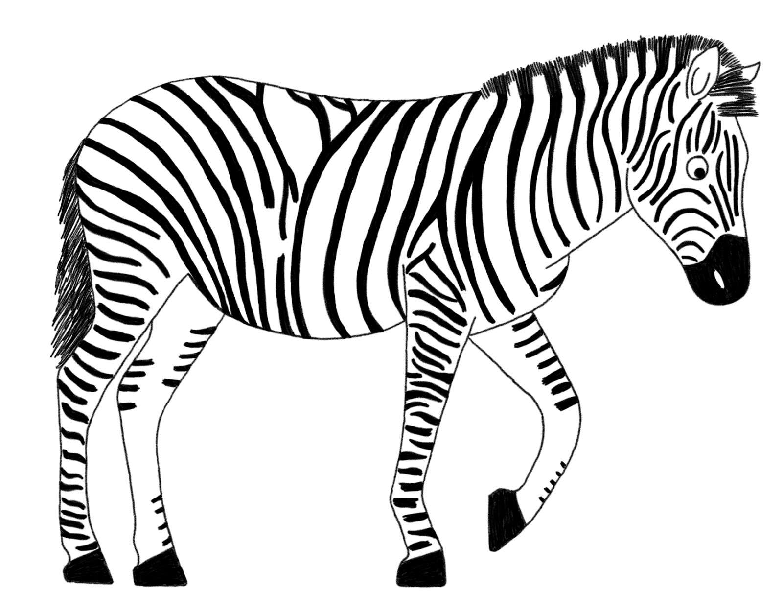 Zebra In Line Drawing