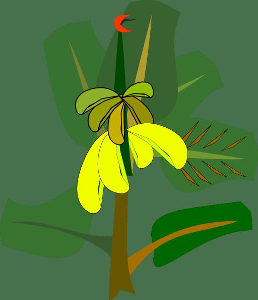 Banana Tree Clip Art - ClipArt Best - Cliparts.co (512 x 594 Pixel)