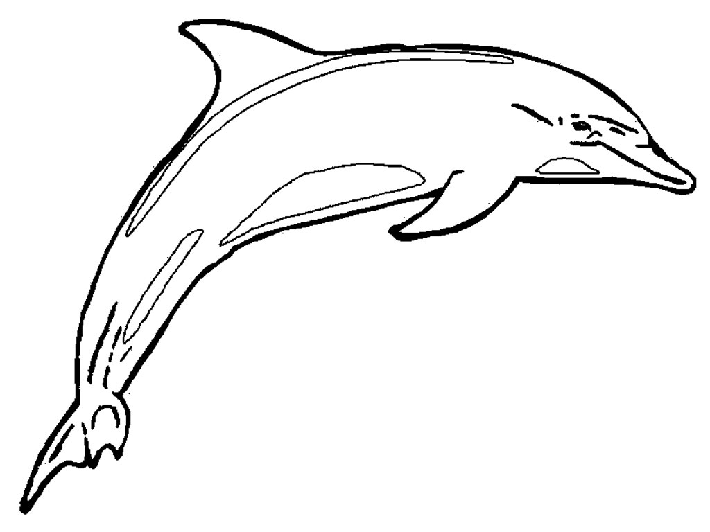 Pictures Of Dolphins For Kids