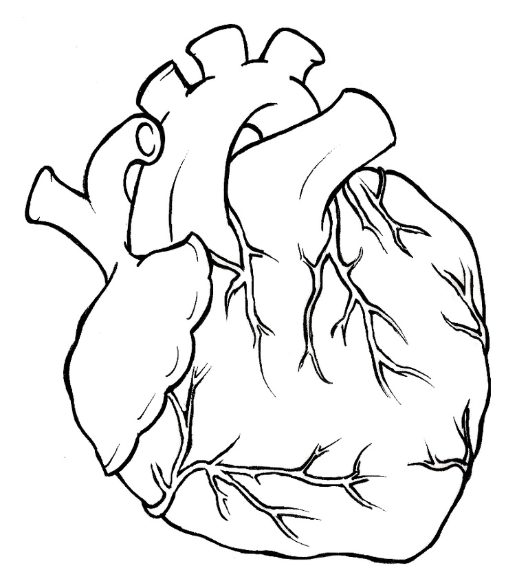 anatomical heart outline tattoo sketch coloring page