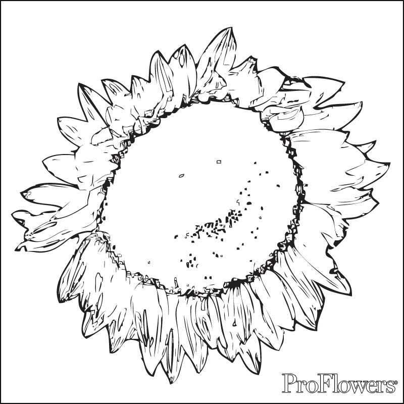 sunflower coloring pages for kids proflowers blog
