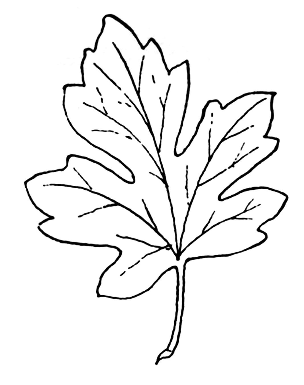 Autumn Leaf Clip Art