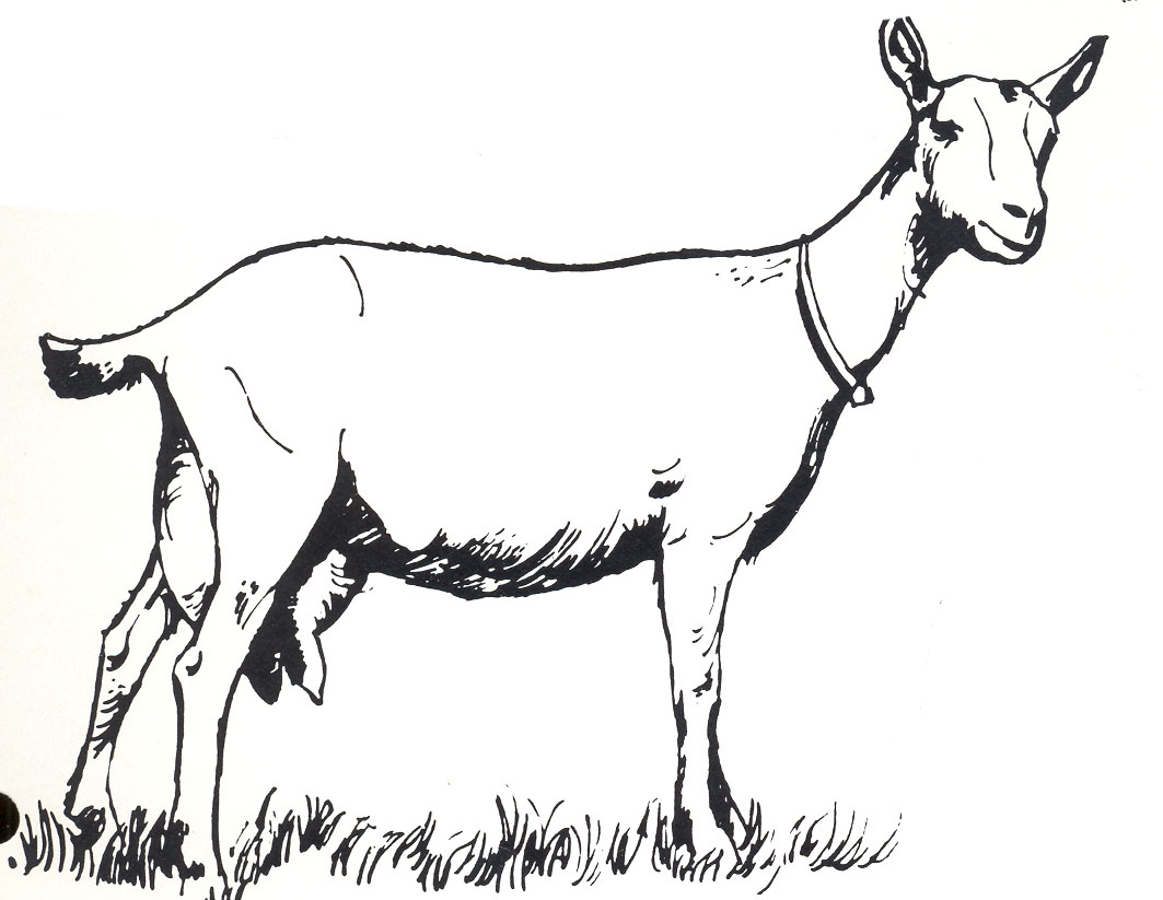 Goat Clip Art Image