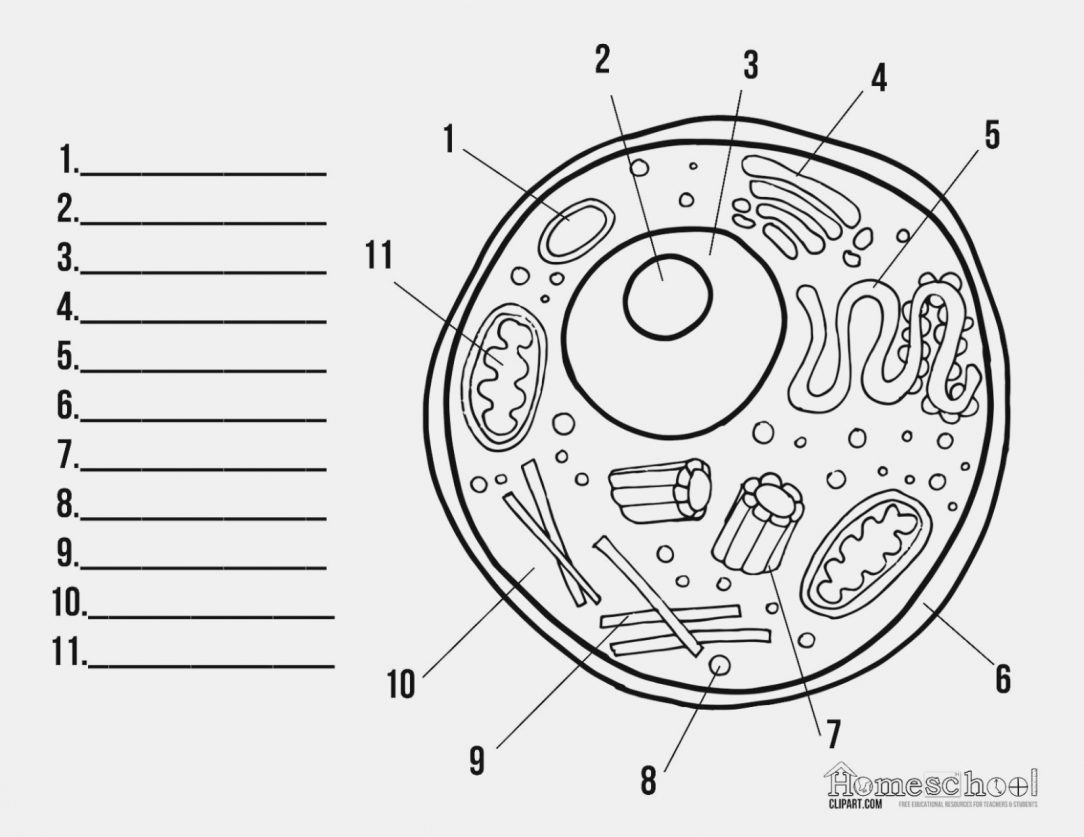 Animal Cell Clipart Labeled 10 Free Cliparts