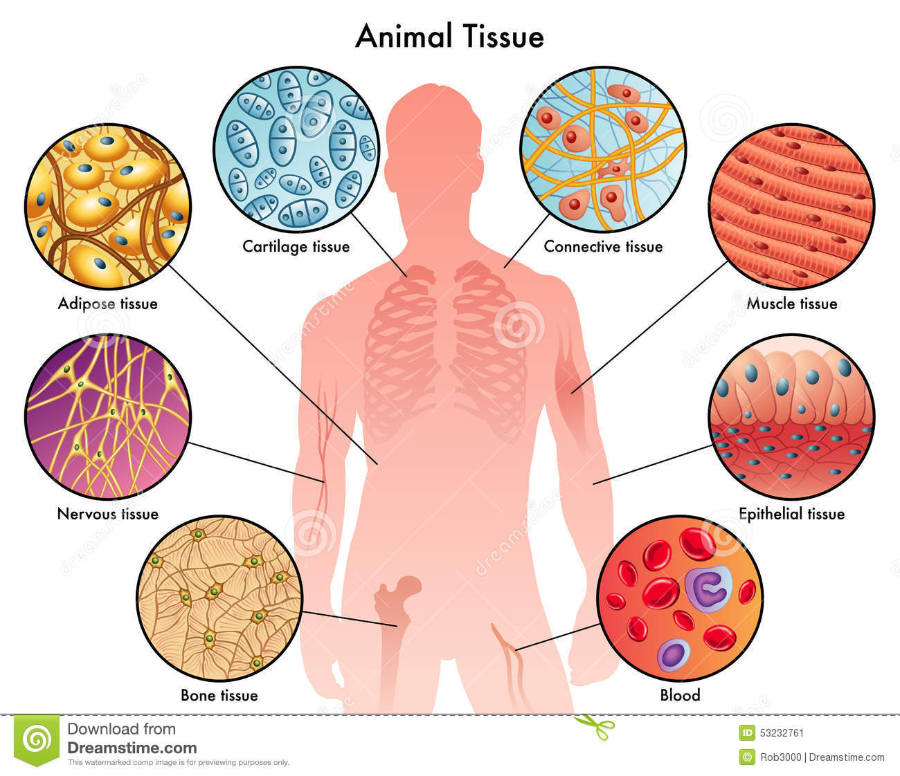 Animal Tissue Clipart 20 Free Cliparts