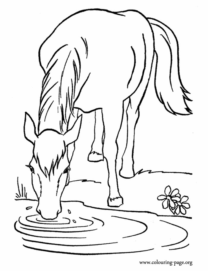 Clipart Horse To Color Clipground