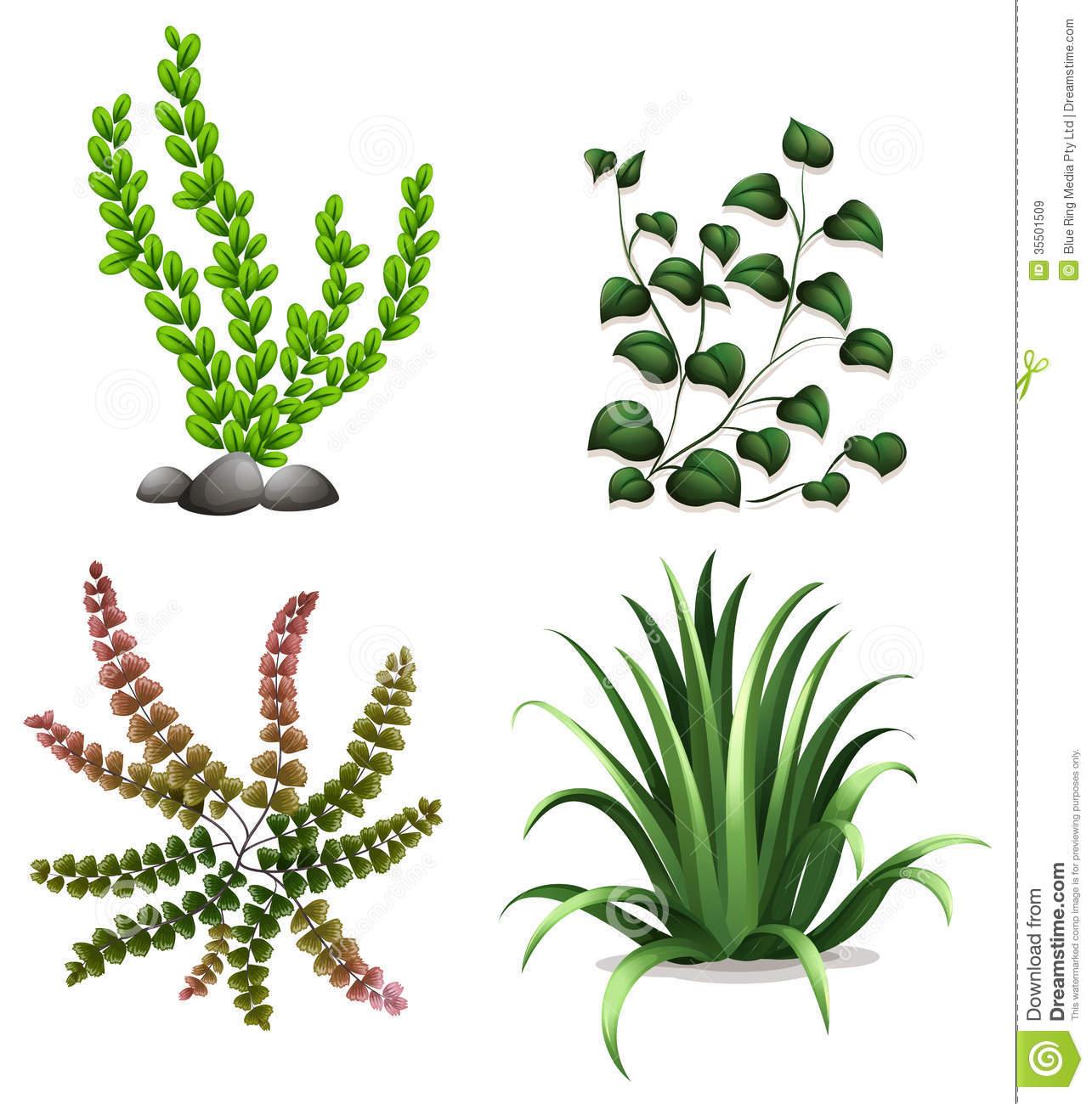 Aquatic Plant Clipart