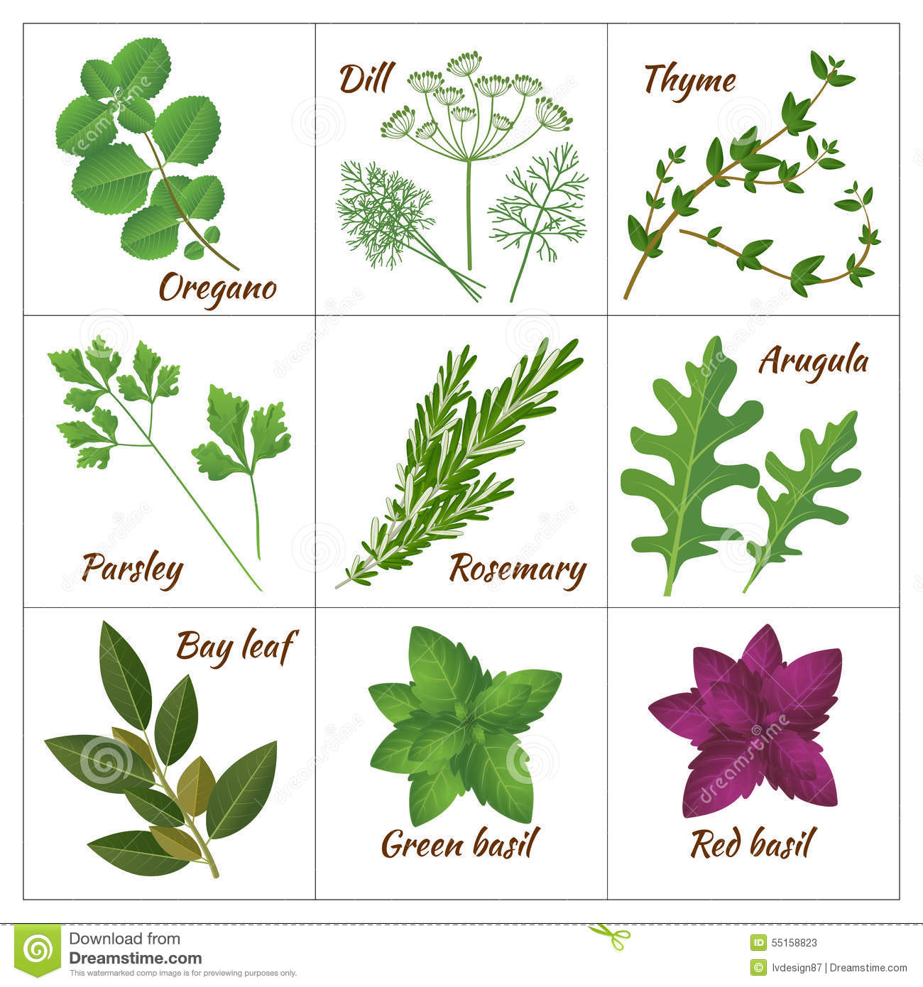 Aromatic Herbs Clipart 20 Free Cliparts