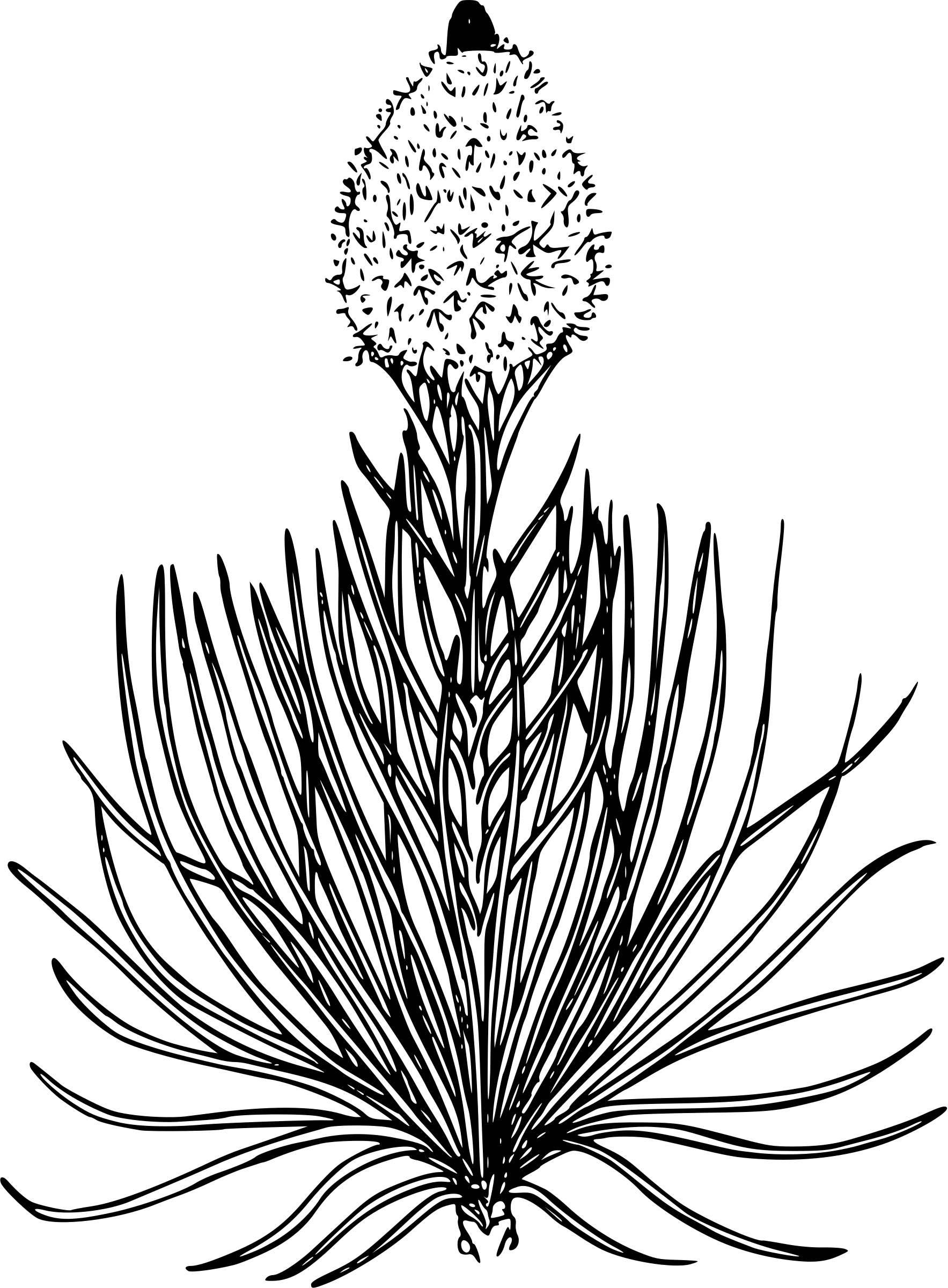 Bear In Grass Clipart 20 Free Cliparts