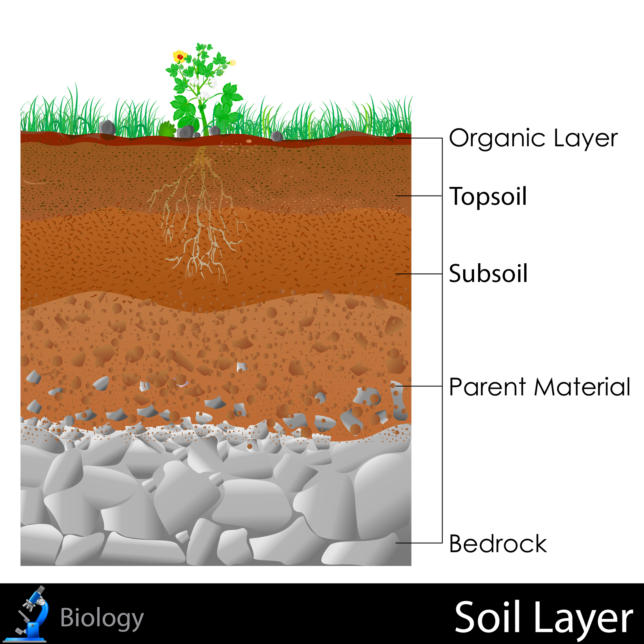 Soil Layer Clipart