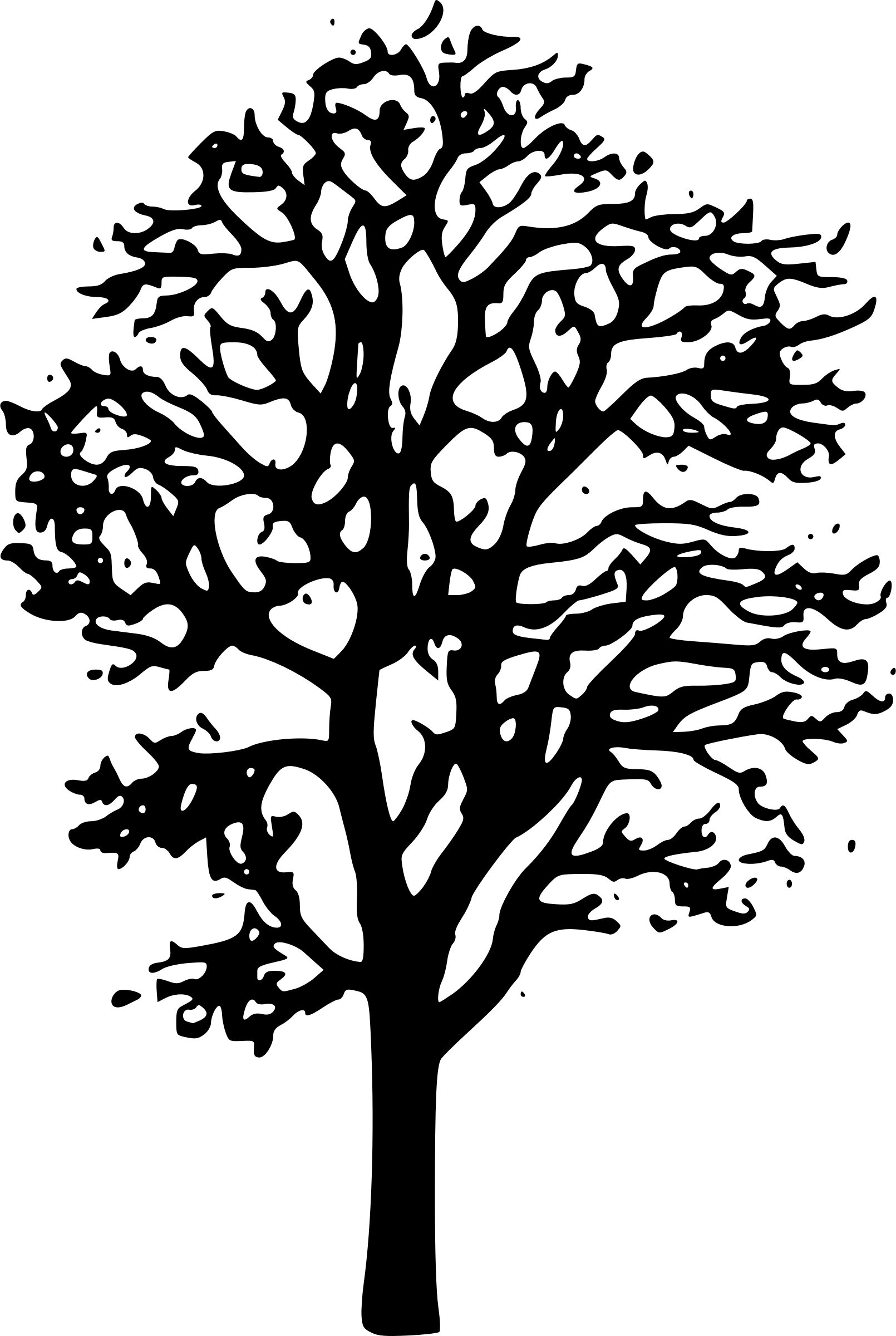 Branches Of Sycamore Tree Clipart