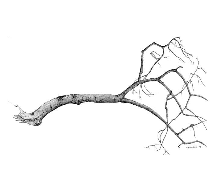 Broken tree clipart - Clipground (720 x 562 Pixel)