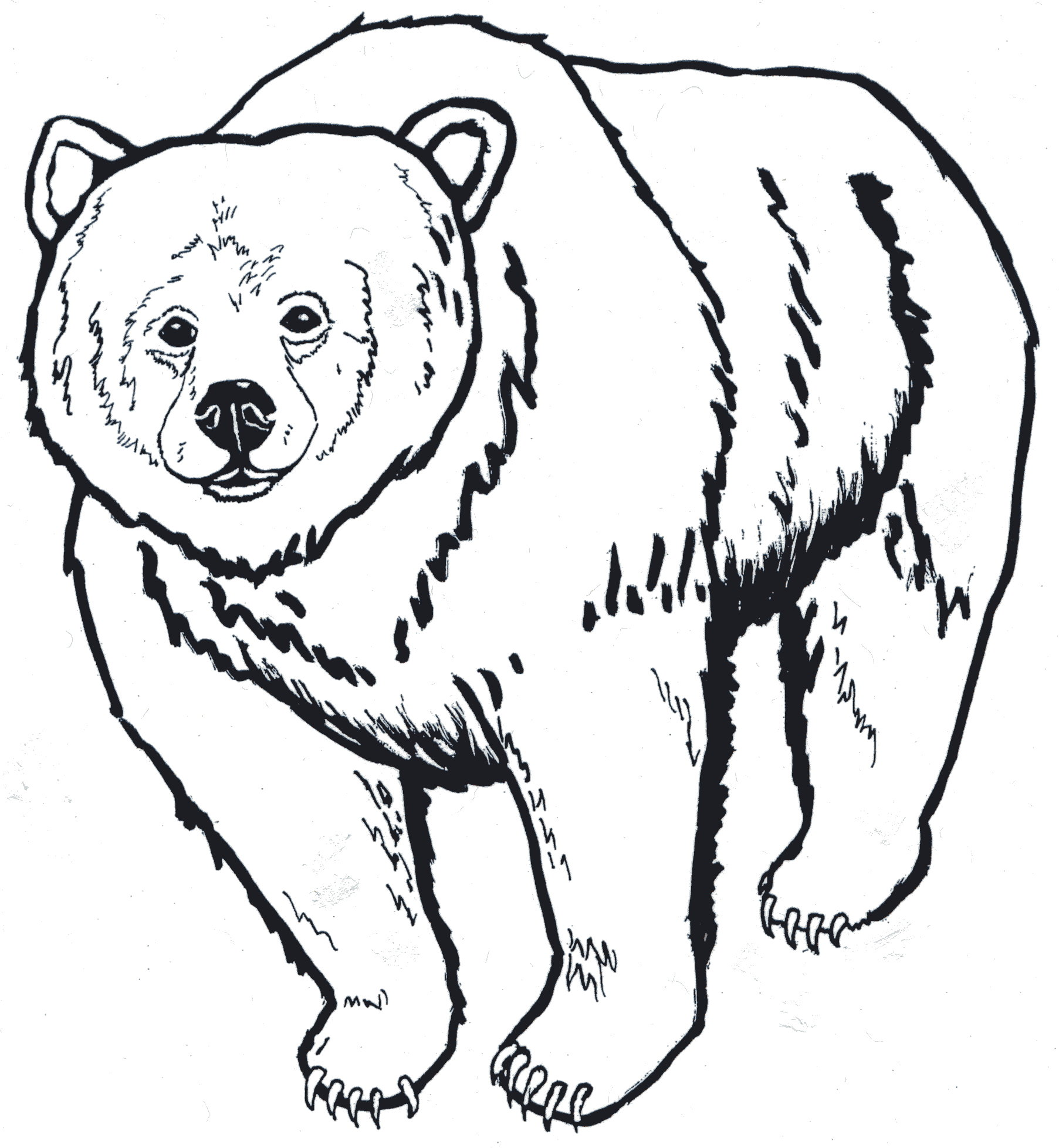 Brown Bear Head Clipart Black And White