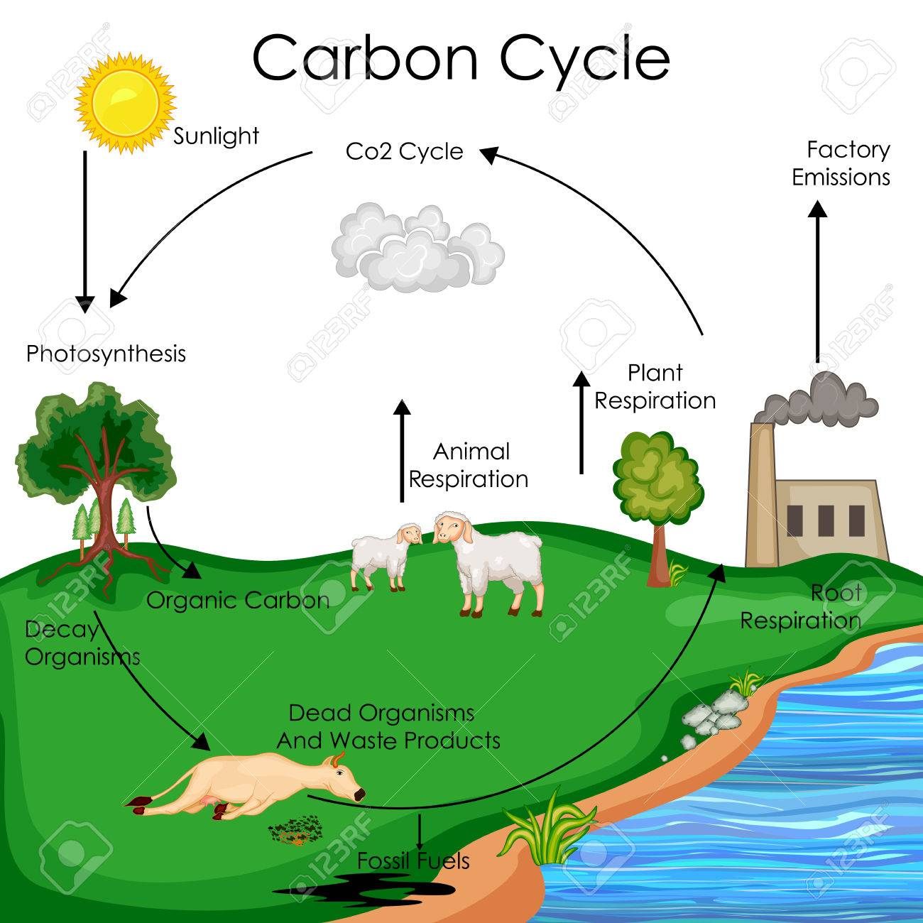 Carbon Cycle Clip Art 20 Free Cliparts