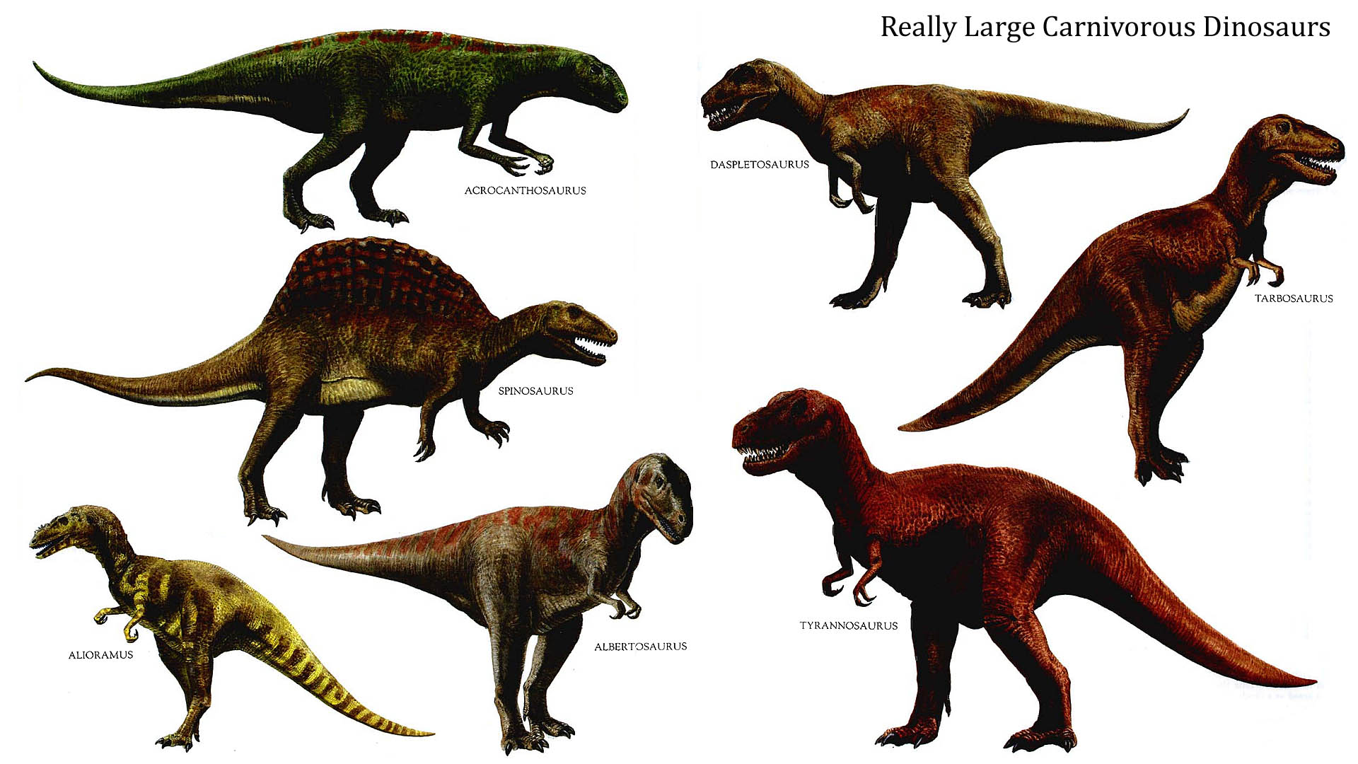 Carnivorous Dinosaurs Clipart 20 Free Cliparts