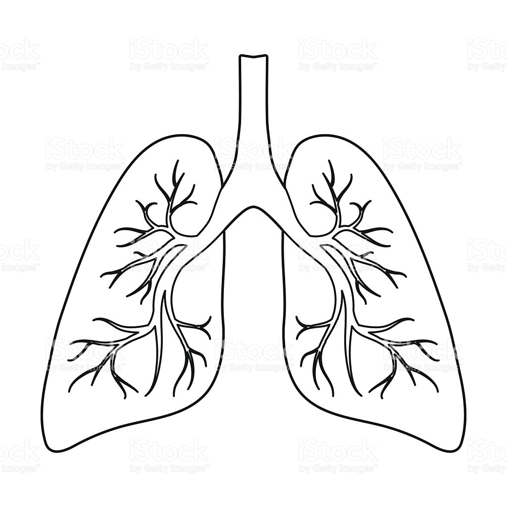 Clipart Outline Of Lungs