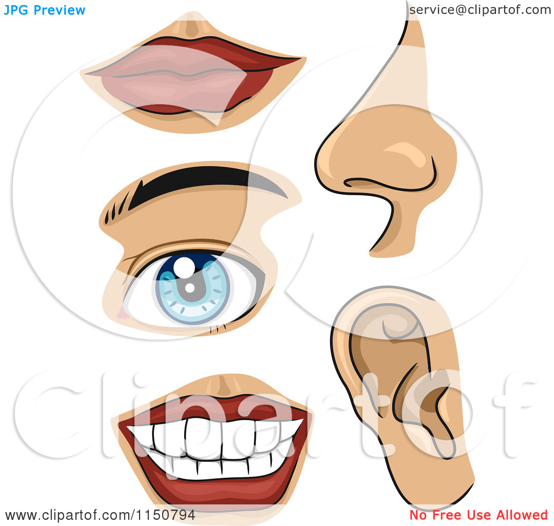 Clipart Part Of Body