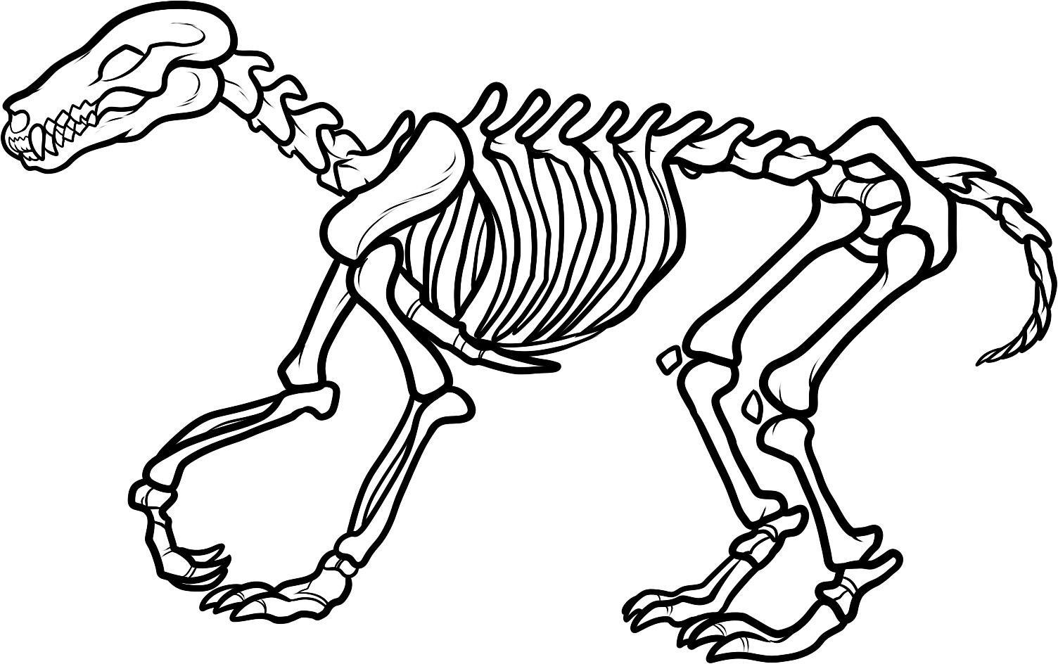 Animal Skeleton Clipart