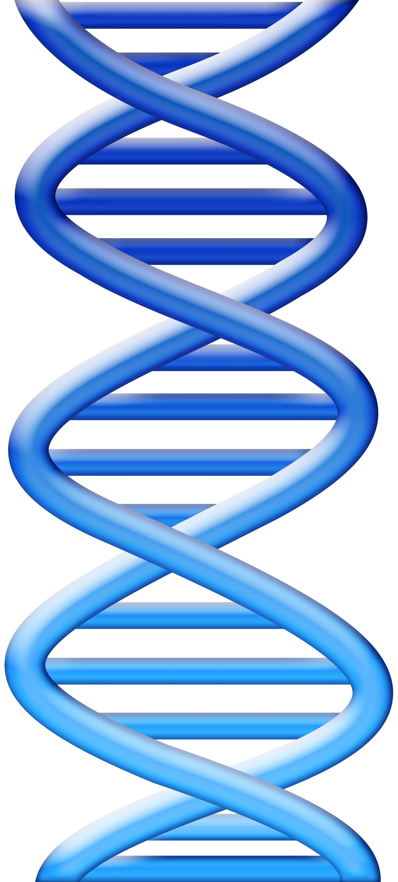 Dna Strand Clipart Free 20 Free Cliparts
