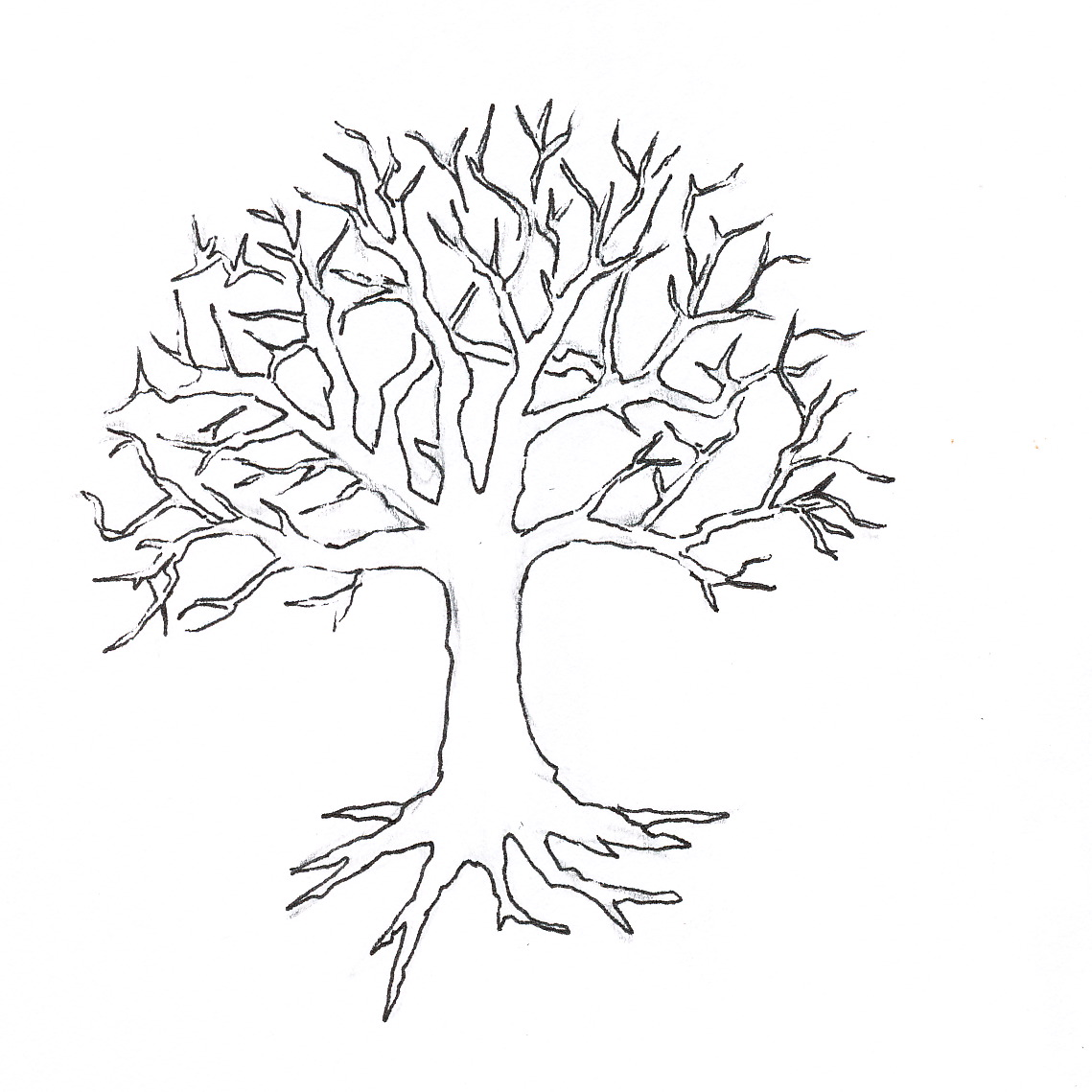 Fall Tree Clipart Black And White Vines 20 Free Cliparts