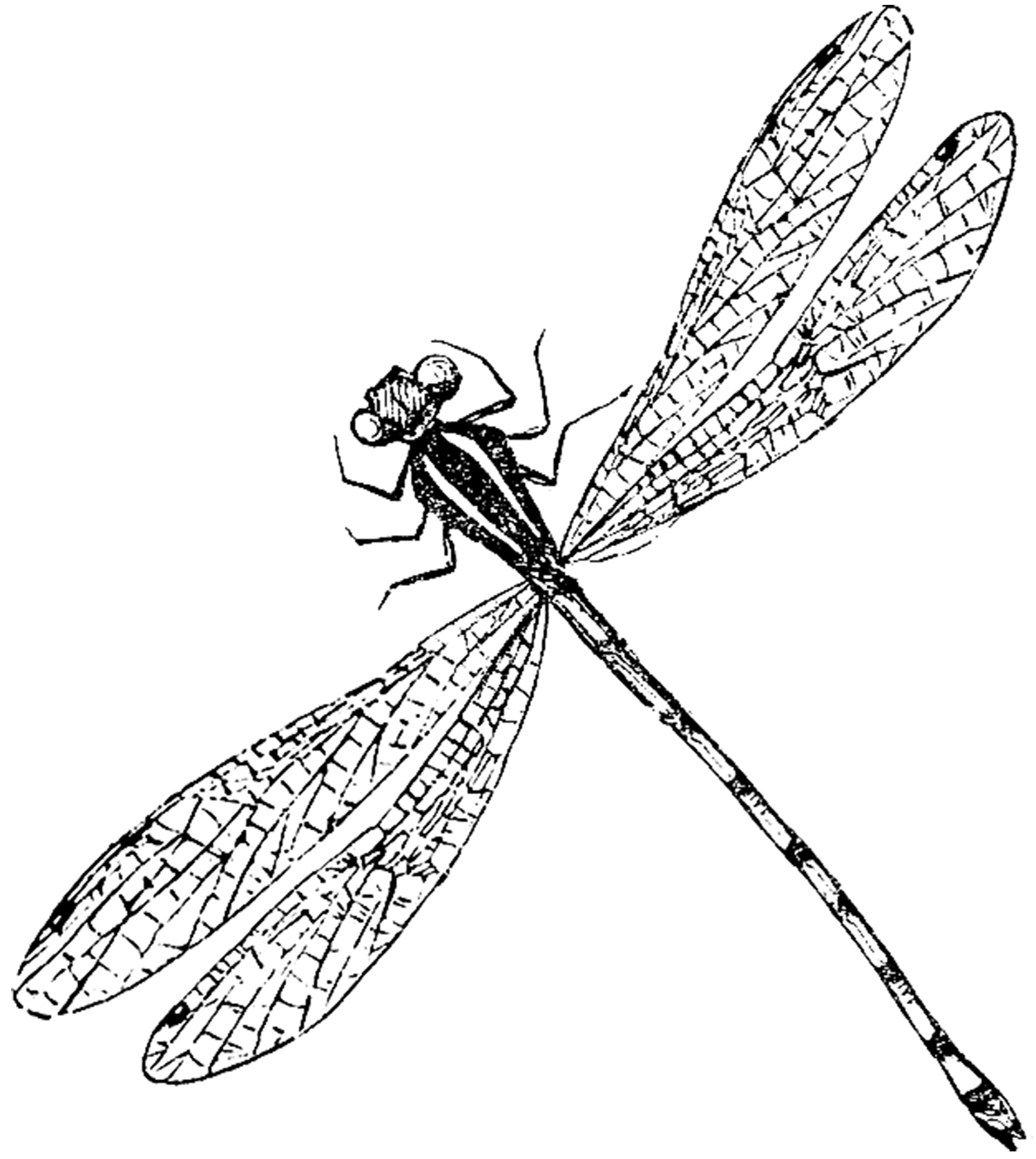 Fly On Leave Clipart