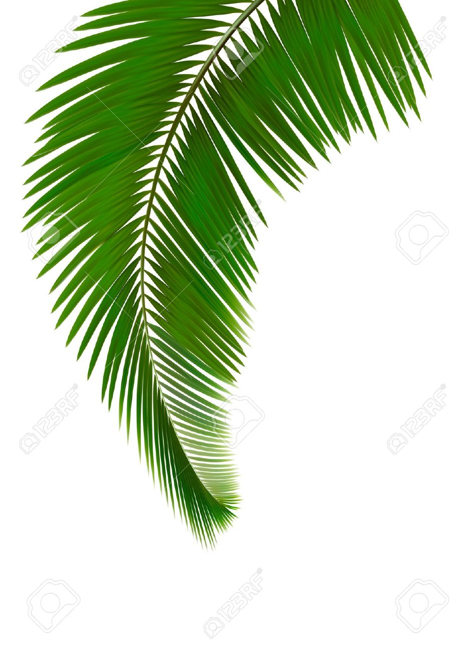 Art Clip Palm Leaves Tree