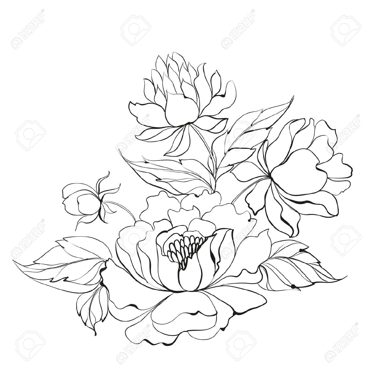 Japanese Peonies Clipart