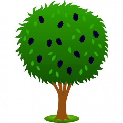 Mulberry Tree Clipart Clipground