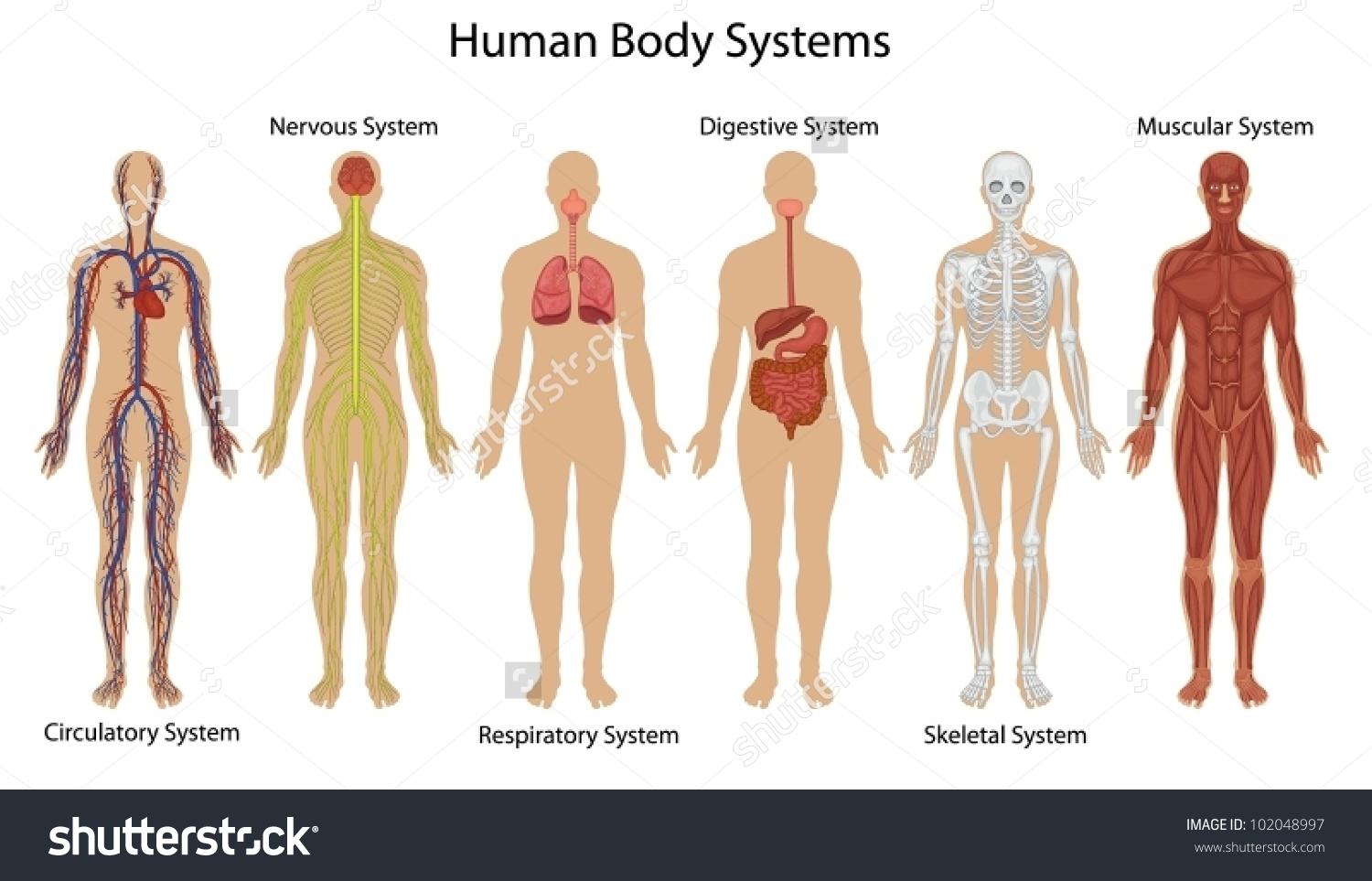 Nervous System In The Body Clipart 20 Free Cliparts