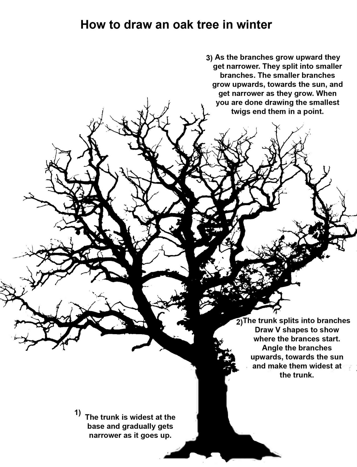 Oak Tree Realistic Clipart To Add To Photoshop