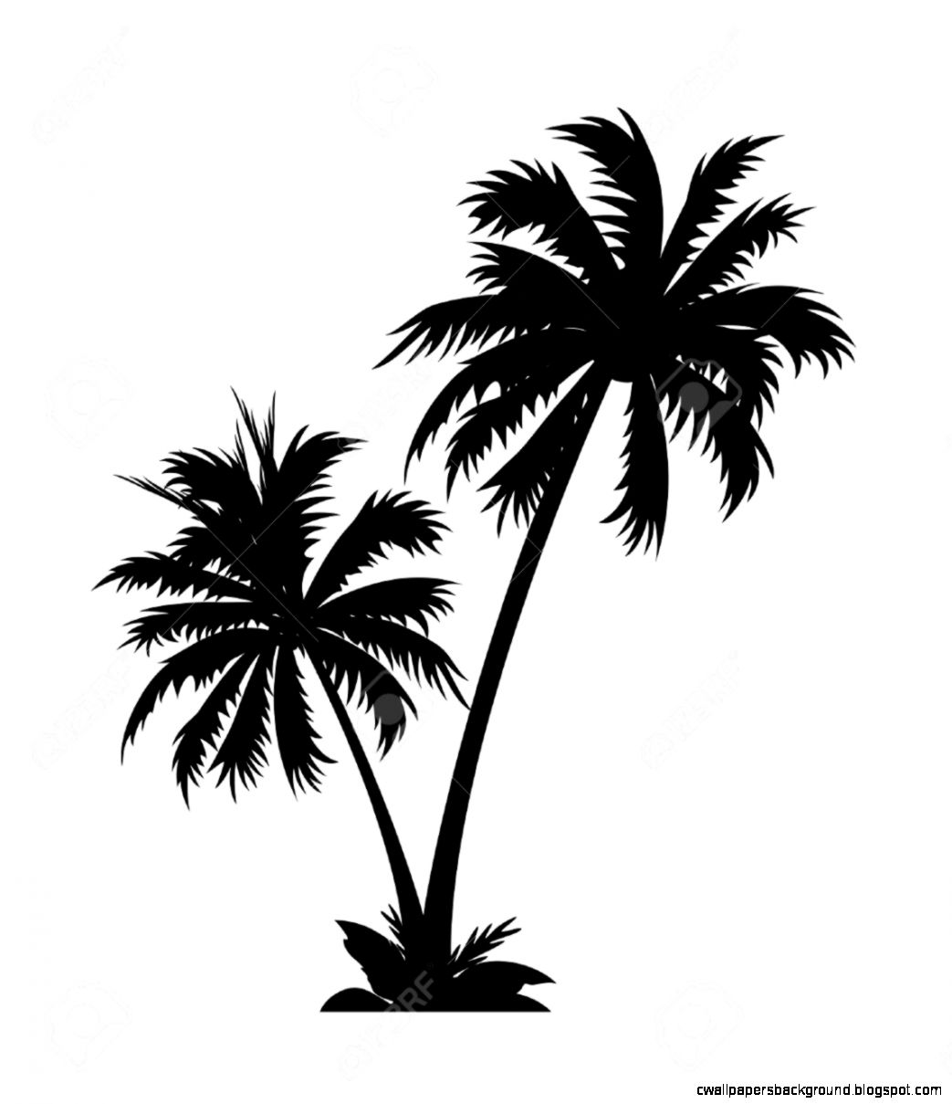 Palm Tree Root Clipart