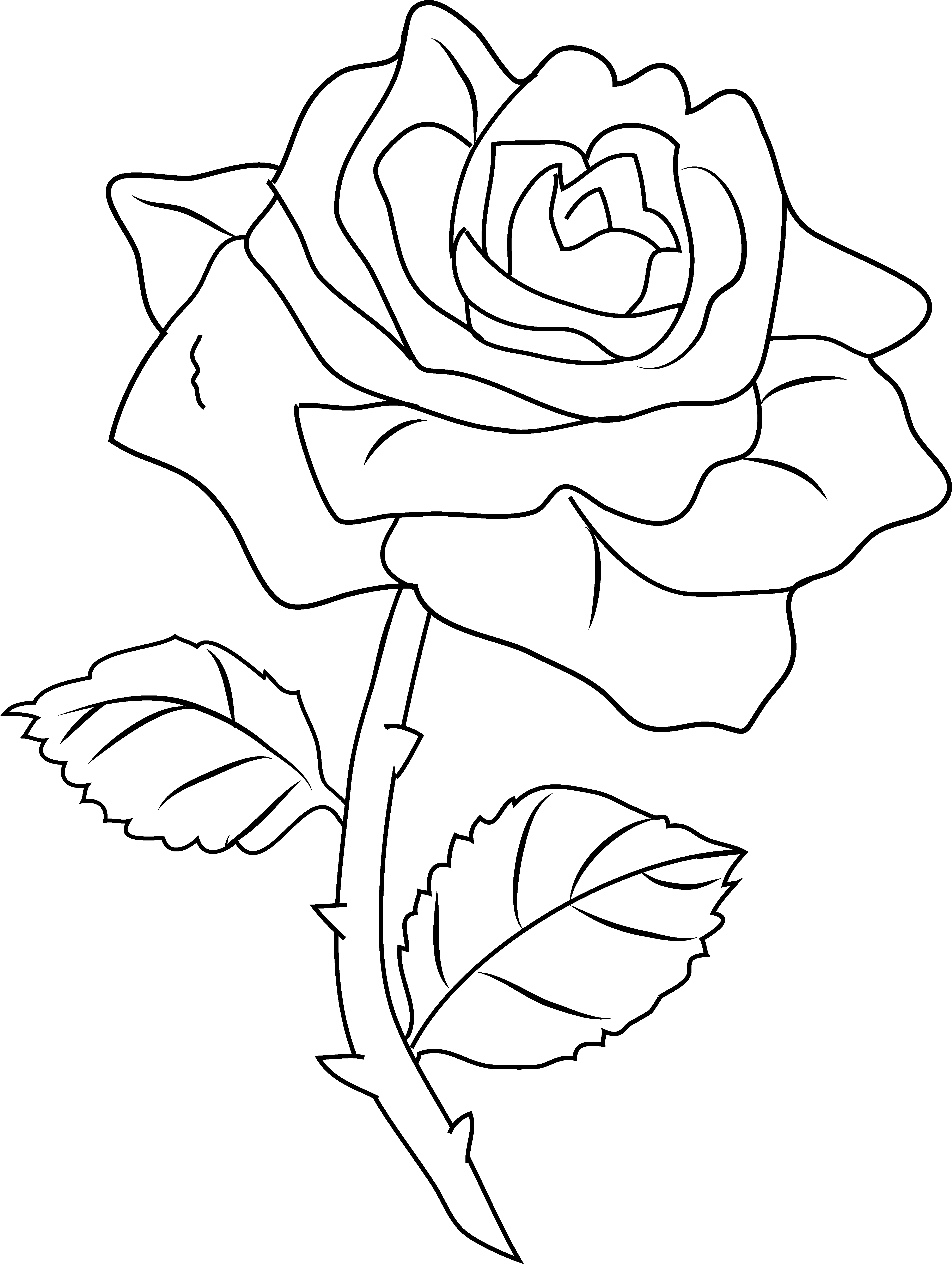 Rose Color Clipart