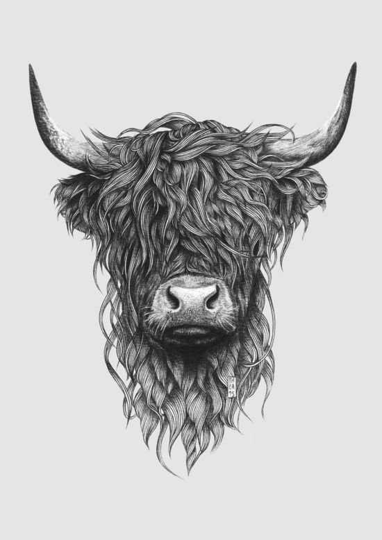 Scottish Highland Cow Clipart Clipground