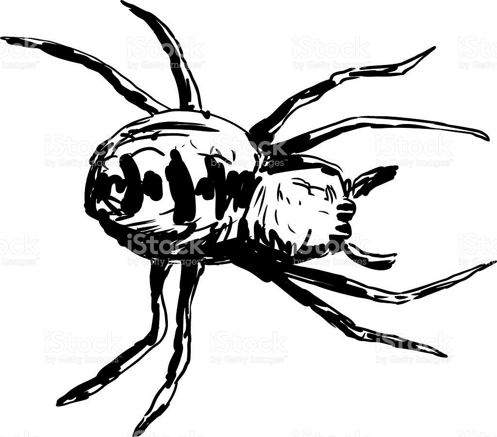 Spider In Garden Clipart