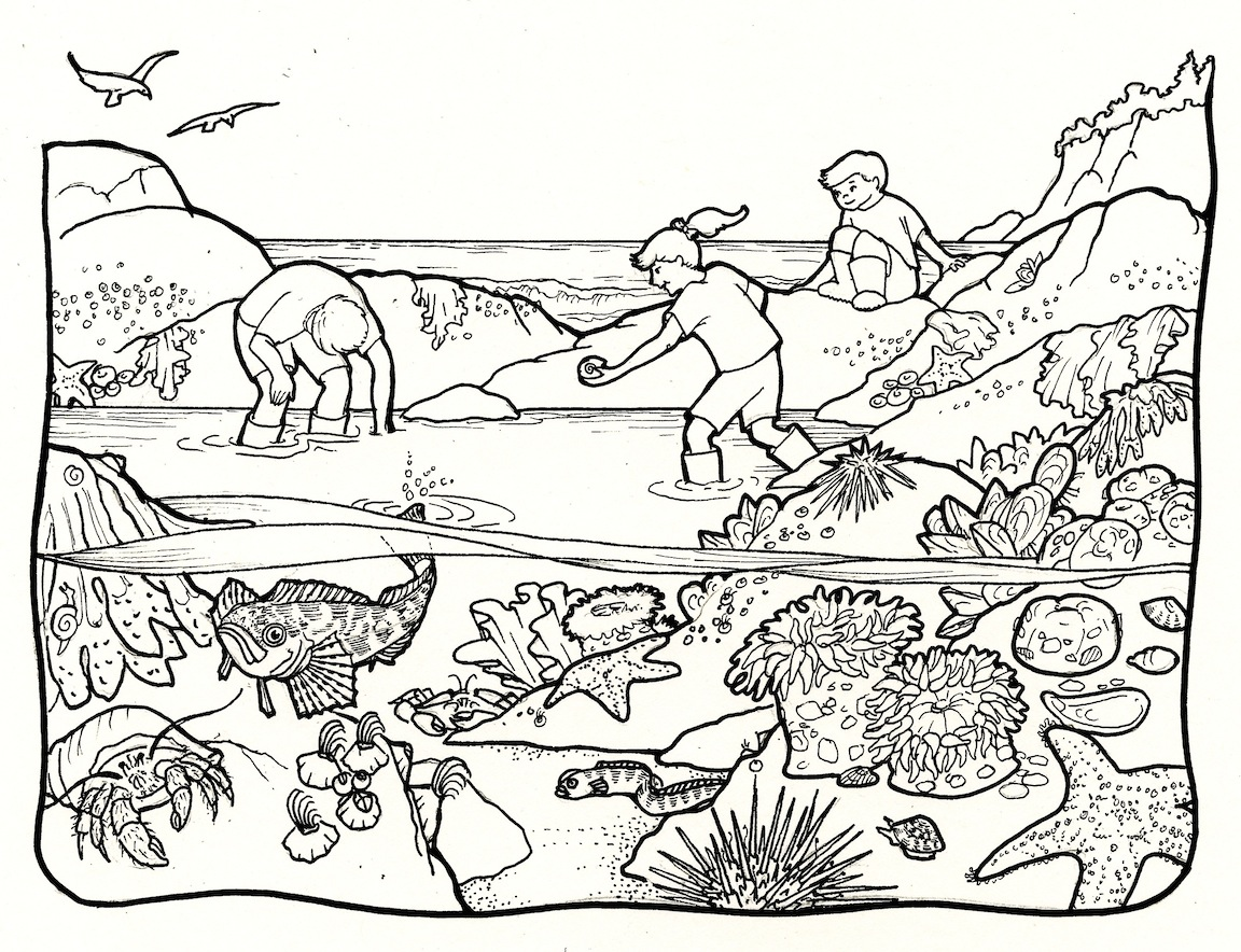Tide Pools Clipart