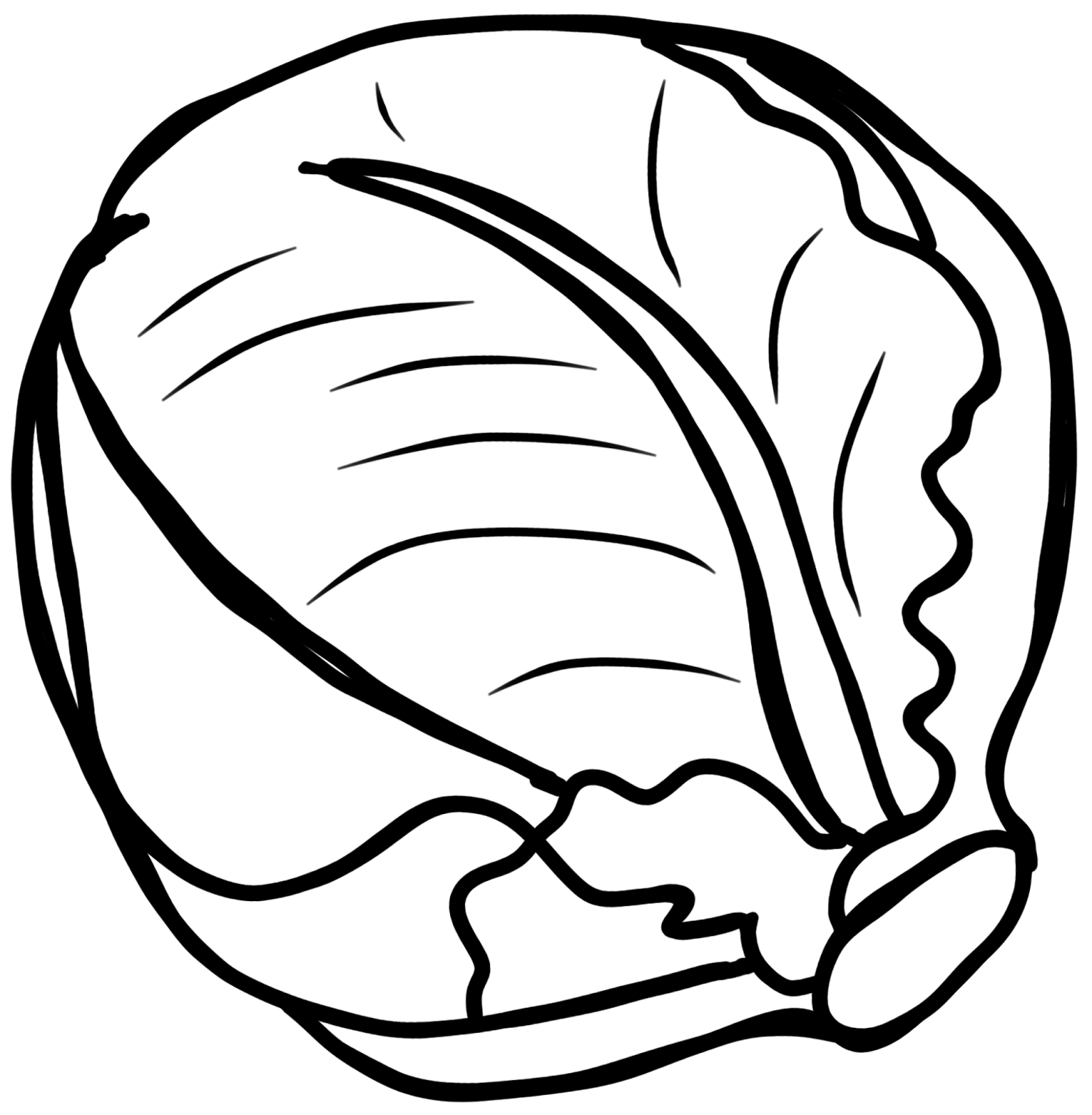 White Cabbage Clipart