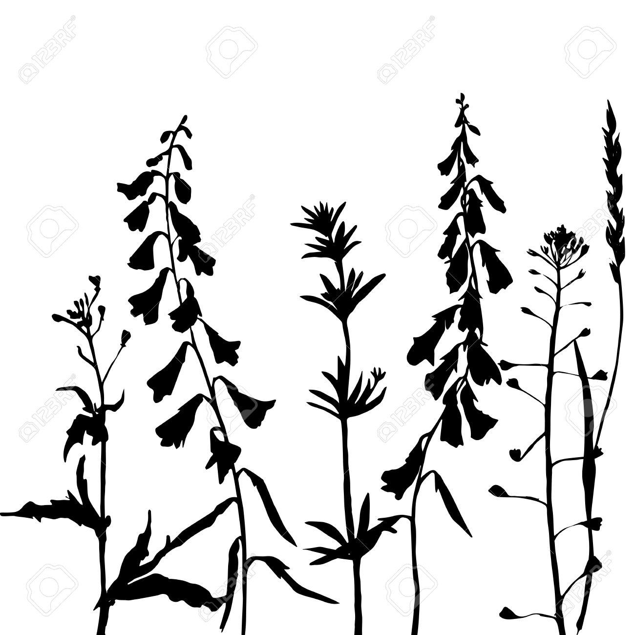 Wild Herb Clipart