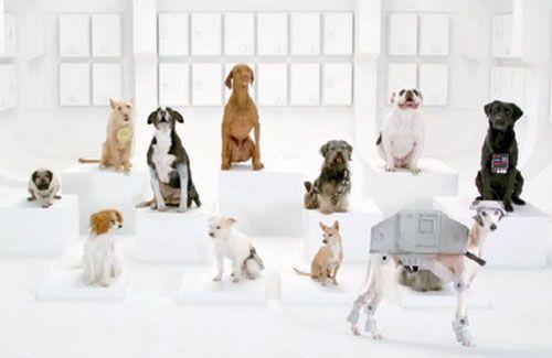 star wars dog chorus