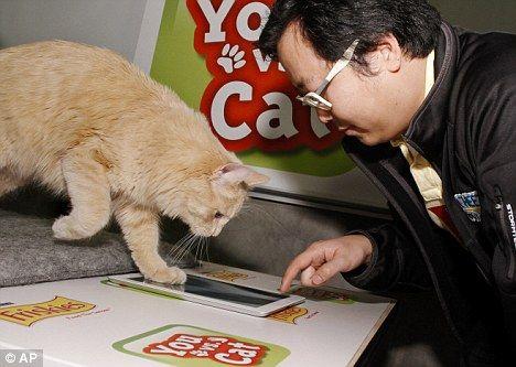 Friskies You vs Cat ipad game