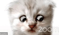 abogado gato video zoom1