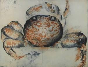 Cat 13.Large Crab, topside (1991)