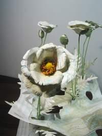 Crop (Afghanistan)