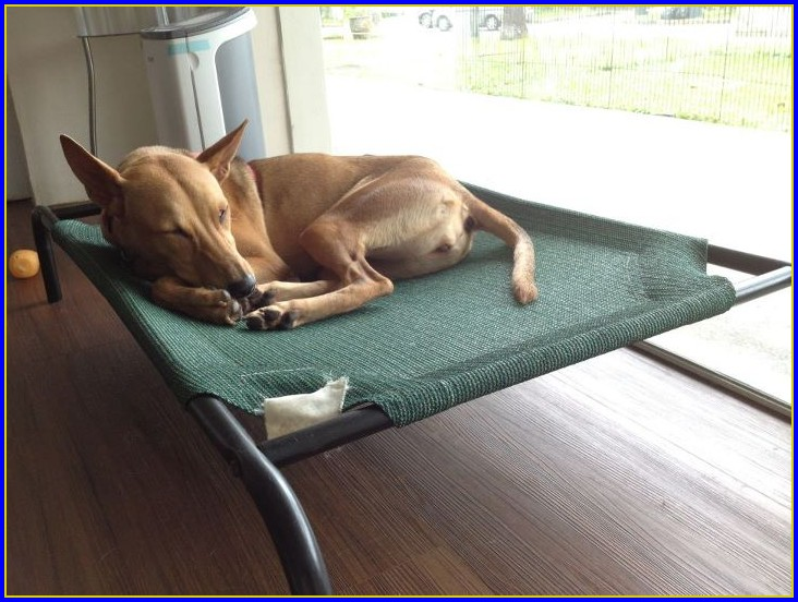 Coolaroo Dog Beds