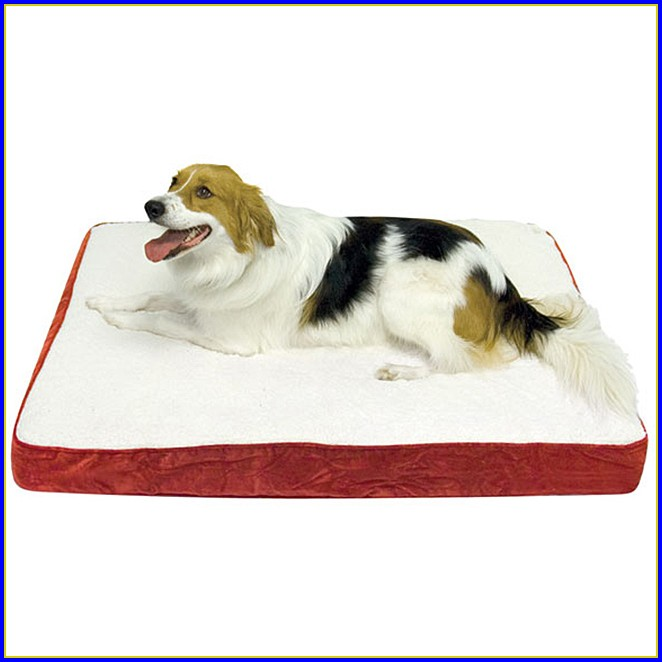 Orthopedic Dog Beds For Large Dogs