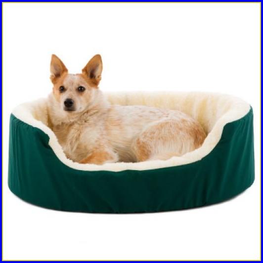 Petco Dog Beds Orthopedic