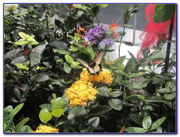 Audubon Butterfly Garden And Insectarium New Orleans Louisiana