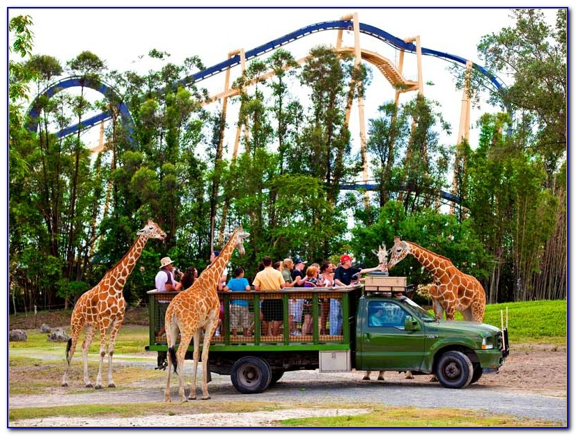 Busch Gardens Tampa Rides And Attractions