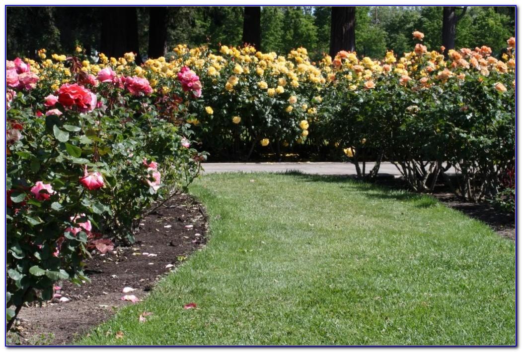 San Jose Municipal Rose Garden Hours